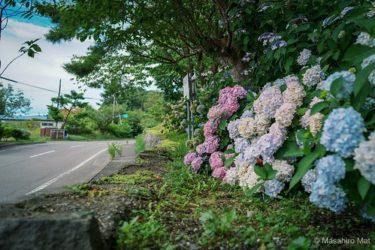 【有珠善光寺】に紫陽花を見に行こう!