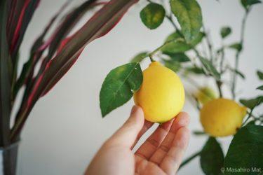 レモンの木と唐揚げ